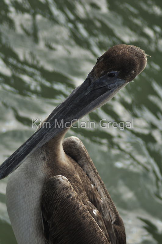 Young Brown Pelican, As Is by Kim McClain Gregal