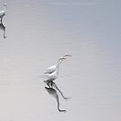 Reflections of Egrets. by barnsis