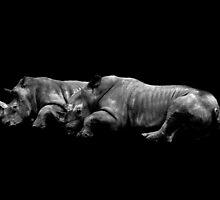 Rhinos by EblePhilippe