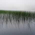 Reeds in the mist, Loch Awe by Gary Eason + Flight Artworks