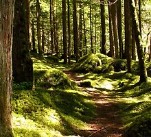 Peaceful path - Chilliwack Lake Provincial Park by Tracy Friesen