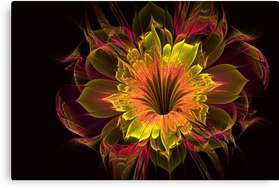 Shine by Pam Amos