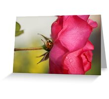 The Ladybug and the Rose Greeting Card