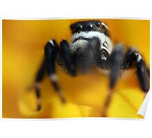 Male Gray Wall Jumper Poster