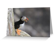 Puffin on a ledge, Saltee Island, County Wexford, Ireland Greeting Card