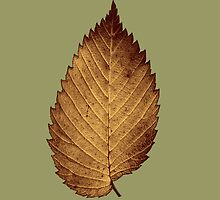 Bronzed Leaf Collection  by Marcia Rubin