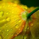 Yellow Rain Drops by Paul Revans