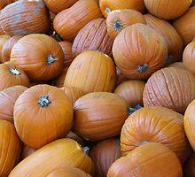 Pumpkins by perrycass