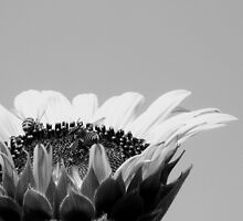 Bees in B&W by DionNelson