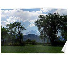 Longs Peak between cottonwood trees Poster