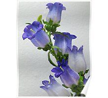 Purple Blossums Poster