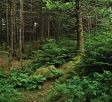 Roan Mountain Scenery by Linda Trine