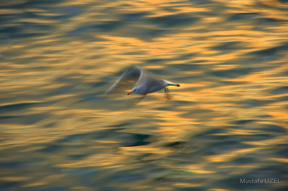 seagull on bosphorus by Mustafa UZEL