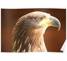 Birds of Prey Series No 1 Poster
