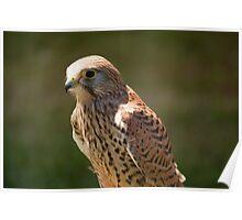 Birds of Prey Series No 2 Poster