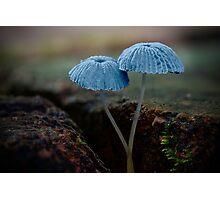 Fungi Season 1112 Photographic Print