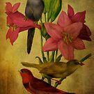 Tender Lilies by Pamela Phelps