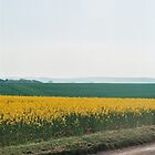 The fields of yellow by Emma Schroeder