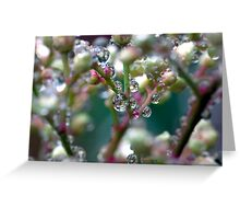 Water droplets on nandina stems Greeting Card
