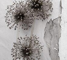 Elegant Decay by rosiephoto