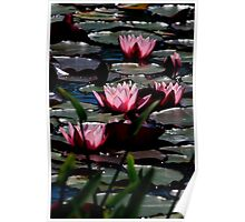 Lovely Lillies Poster