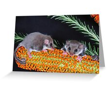""""""" FEATHERTAIL GLIDER """" Greeting Card"""