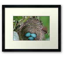 Robin's Eggs Framed Print