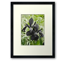 just a touch of green Framed Print
