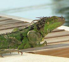 Dragon Portrait by Bob Hardy