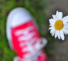 The Daisy Chuck by Alexis  Bonner