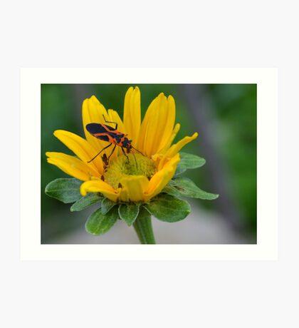 Orange and Black Bug on Yellow Wildflower Art Print