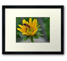 Orange and Black Bug on Yellow Wildflower Framed Print