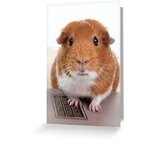 Guinea Pig Gets An Education  Greeting Card