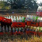 pop bottles by richard  webb