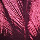 palm shadow on pink  by richard  webb