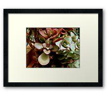 Jade Leaves Framed Print