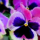 Perfect Pansies by Debbie Robbins