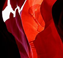 Antelope Abstract by Tim Scullion
