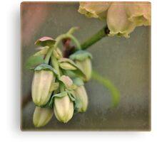 Blueberry Blossom Canvas Print