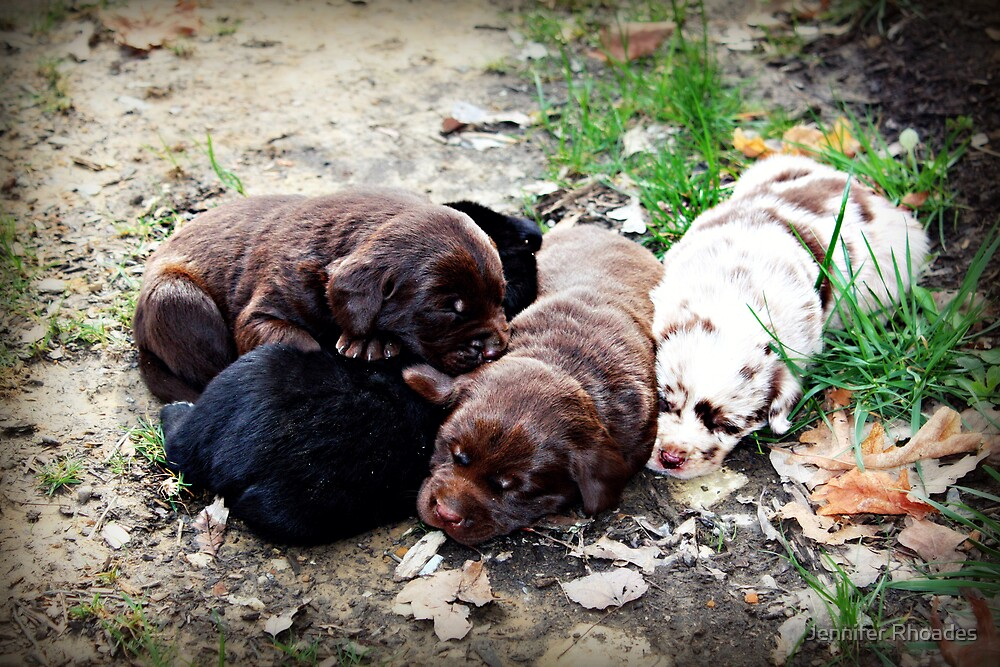 Coco's Puppies by Jennifer Rhoades