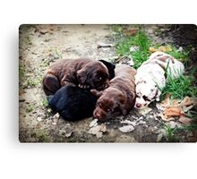 Coco's Puppies Canvas Print
