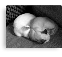 Sleeping kittens. Canvas Print