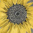 Sunflower by Leonie Mac Lean