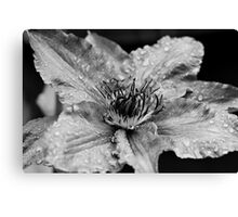 Clematis in the Rain Canvas Print