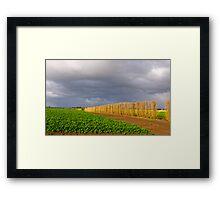 Carrot farming, Cardinia, Gippsland, Victoria. Framed Print