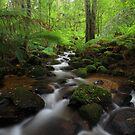 Warburton Rainforest Gallery by Donovan wilson