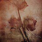 3 DRIED ROSES by scarletjames