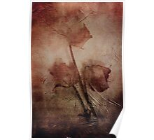 3 DRIED ROSES Poster