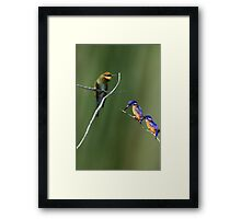 The Colourful Shore-dwellers! Framed Print