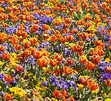 Tulip Carpet by RRDA